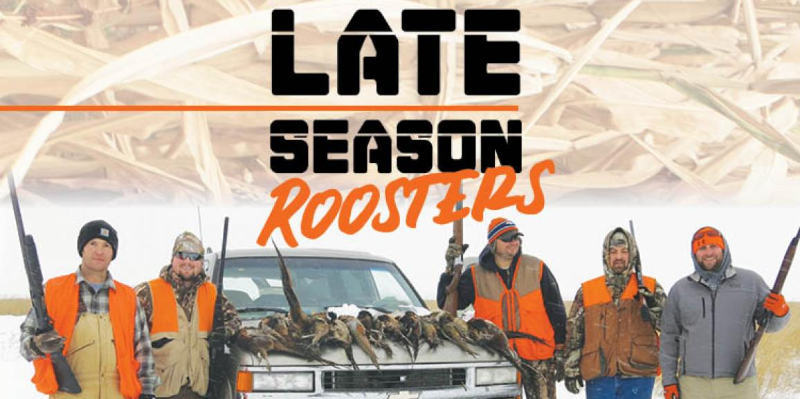 Late Season Roosters